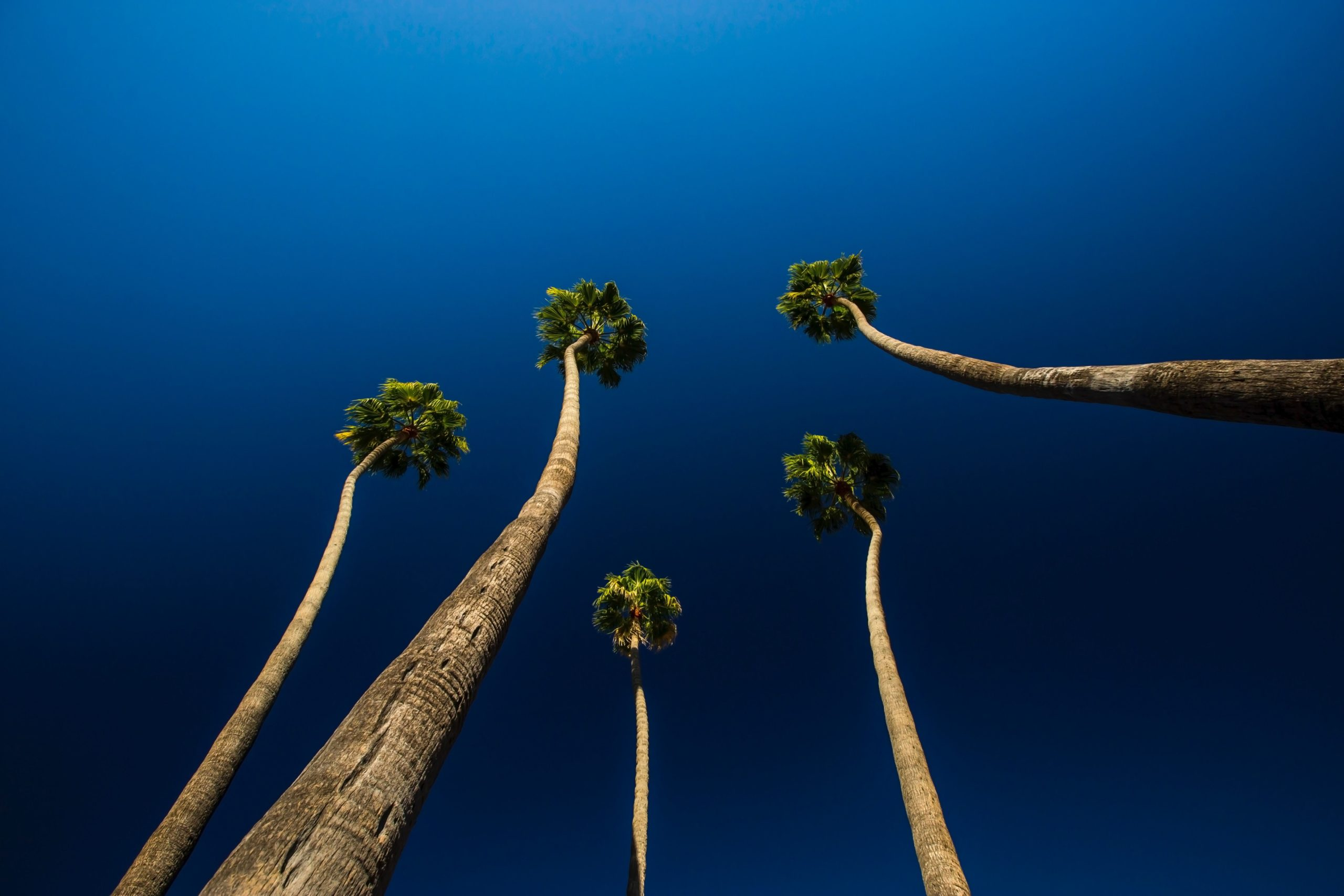 Bottom view of five long trees under the blue sky