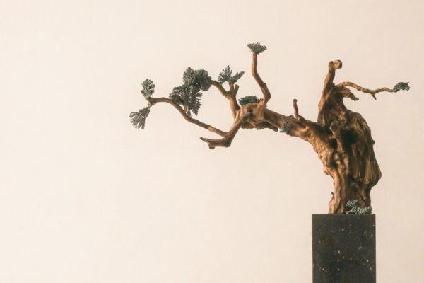 A bonsai plant in a rectangle pot