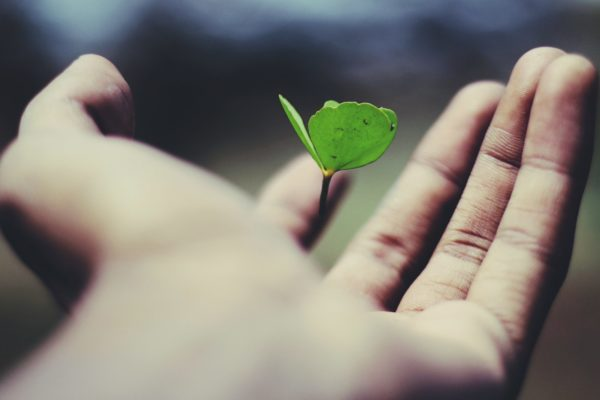 Picture of a small plant in the palm of a person's hand